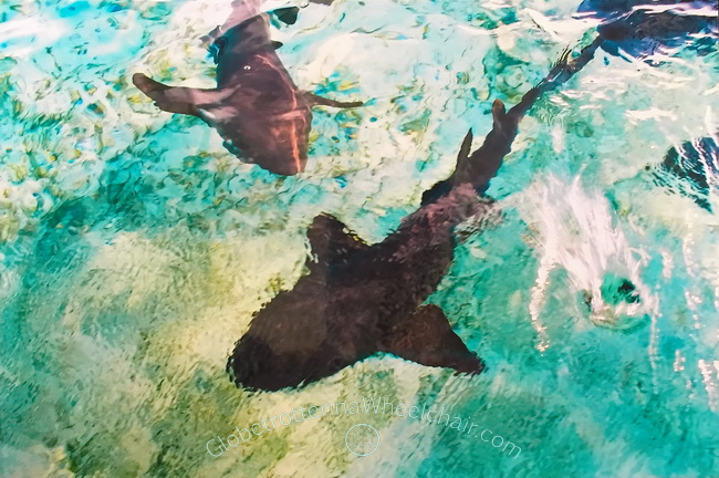 Playing with sharks at Caye Caulker, Belize
