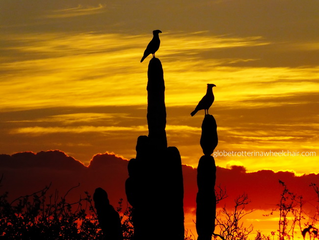 two vultures at cactus in sunset