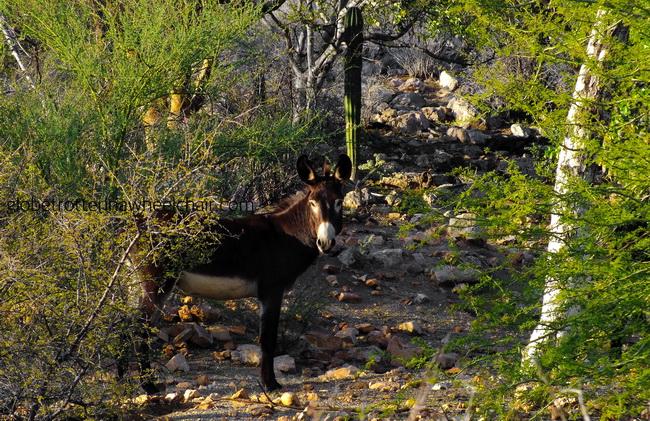 donkey in landscape