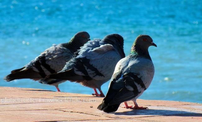 doves in La Paz bay in Mexico © curiousKester.com | Kirsten K. Kester