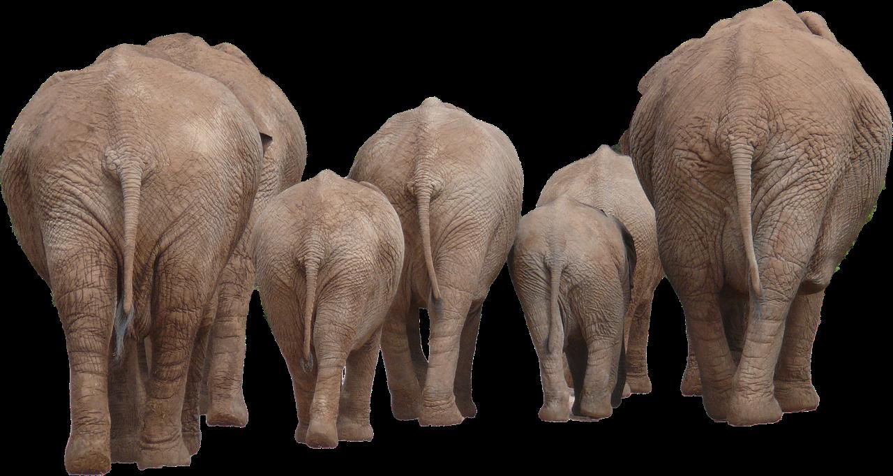 elephants © curiousKester.com | Kirsten K. Kester